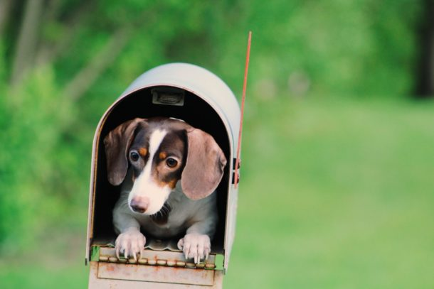 Cute puppers delivering newsletters
